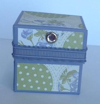 wisteria wonder